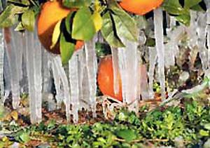 portokali.jpg