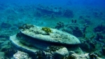 Zakynthos-onderwater