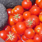 tomaten santorini