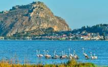 De groep flamingo's bij Nafplio / foto: AMNA