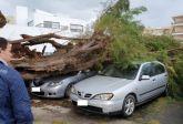 Omgewaaide bomen zorgden voor schade aan auto's